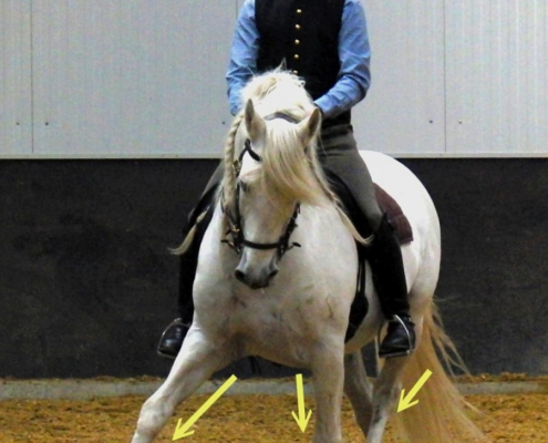 Dressage2Learn Beenzetting in het Wijken biomechanisch